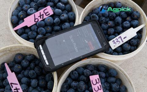AgPick scanning blueberry buckets