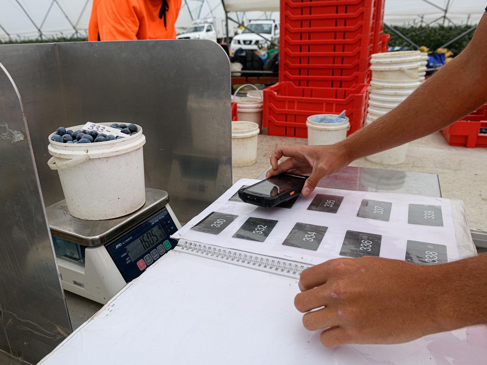 AgPick scanning a picker's identification